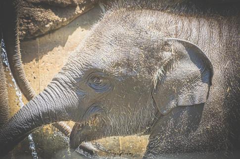 Zoo_Aquarium_028.jpg