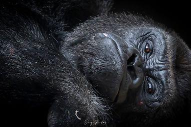 Zoo_Aquarium_042.jpg