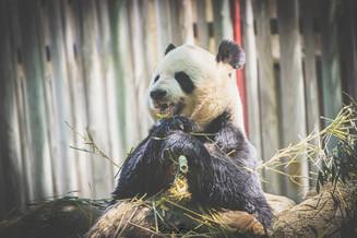 Zoo_Aquarium_020.jpg