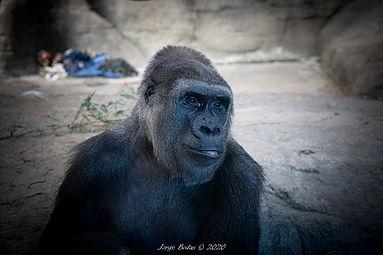 Zoo_Aquarium_038.jpg