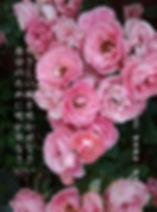 ピンク薔薇縦書き 試作版1.jpeg