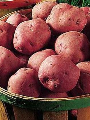 Potatoes (Large Basket)