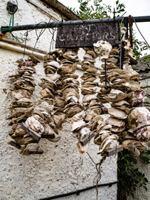 Oyster shells In Whistable