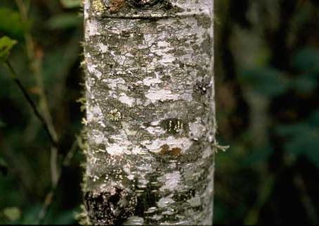 Reforestation In Oregon