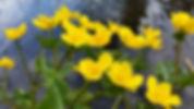Ilon Tuli - Nuuksion metsää ja puro