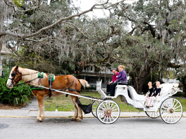 Jacksonville Protest Group Organizes Against Horse-Drawn Carriages In St. Augustine