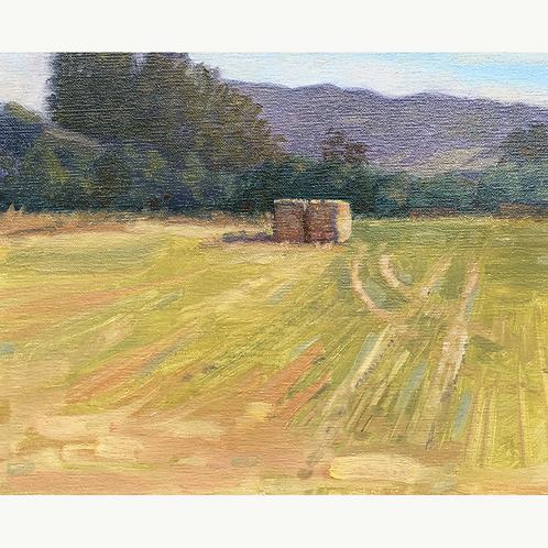 Petaluma Field