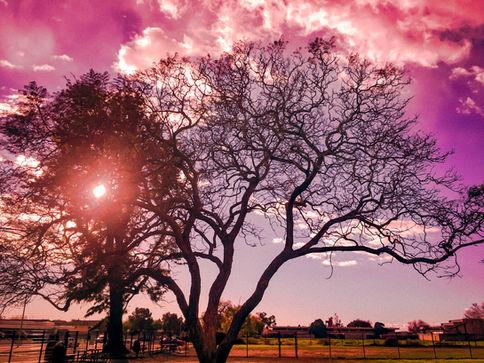 Dog Park Tree