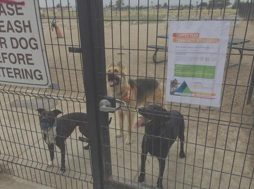 Campus Park Dog Park