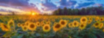 mariasunflower.jpg