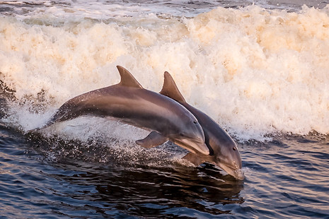 Dolphin Cruise Play