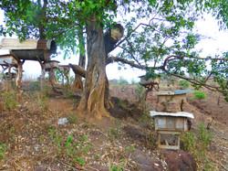 Voyage au Cameroun