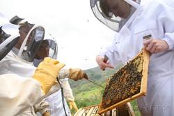 Initiation apiculture