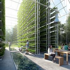 Urban Vertical Farming