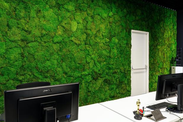 Artificial Moss Wall