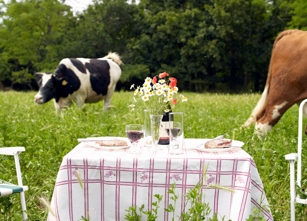 cows in a pasture at lunch