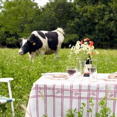 Dairy Cow Feeding
