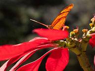 borbolet-laranja-pousando-na-flor-vermelha.jpg