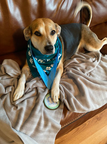 Willow Miller relaxing in Paw-er Walk for Peace race swag!