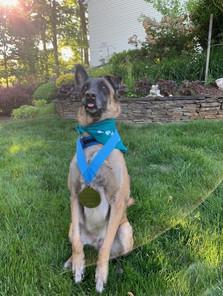 Canine Ambassdor Sammy wearing her Paw-er Walk for Peace Race Swag.