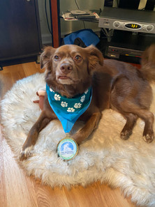 Dogged supporter, Nala Miller, wearing Paw-er Walk for Peace race swag.