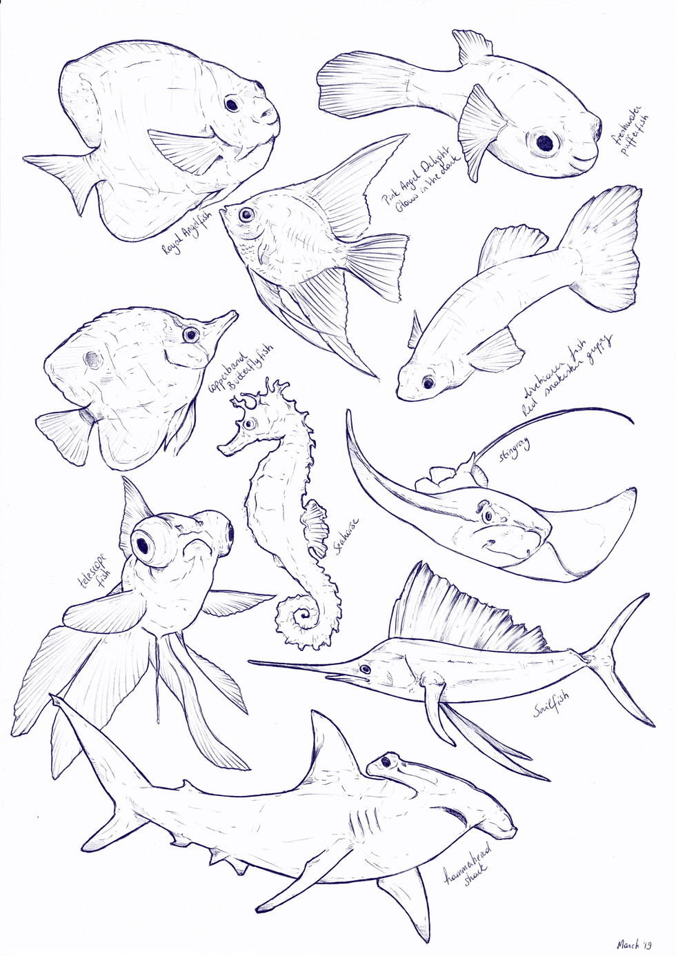 Fish sketches