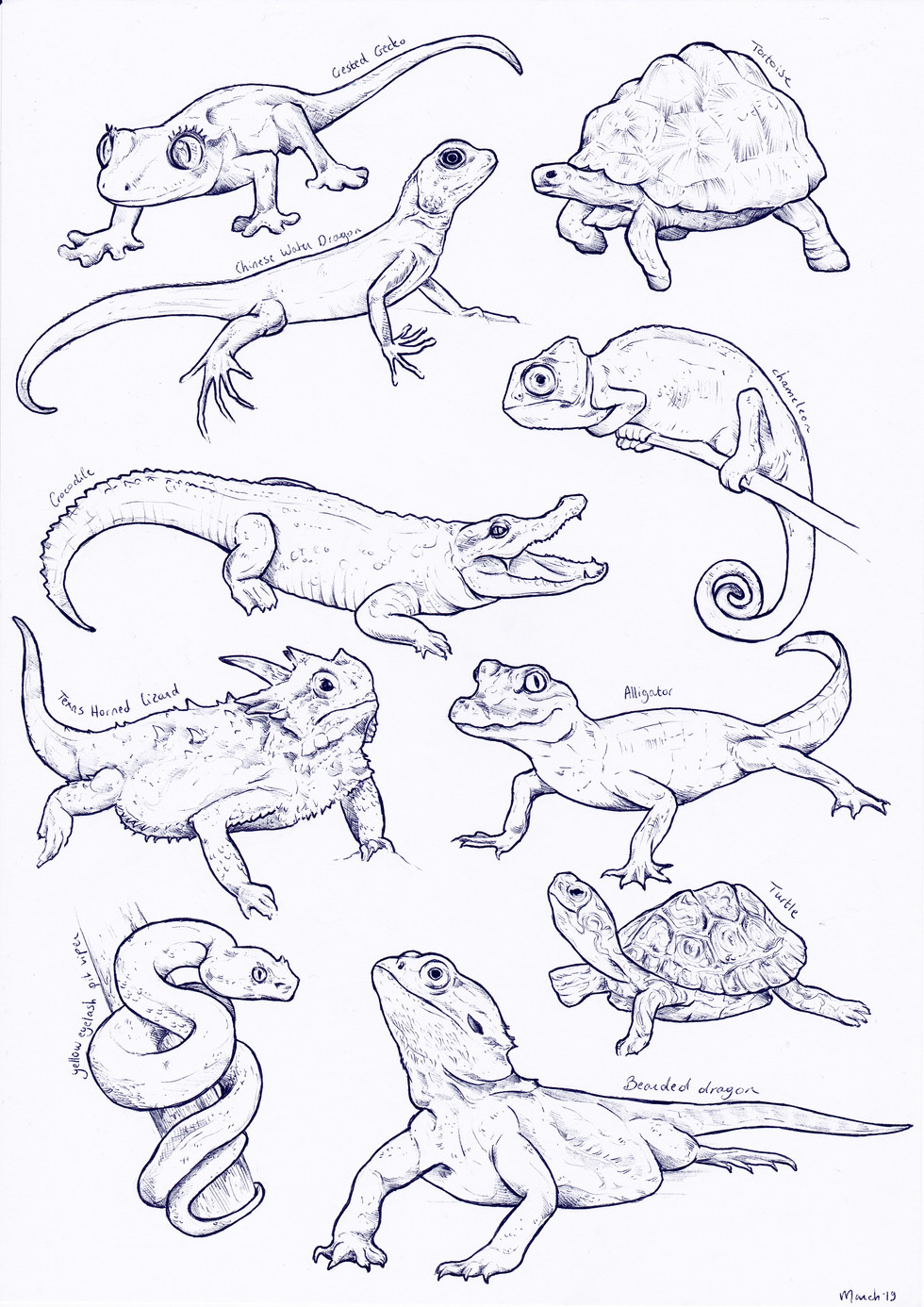 Reptile sketches