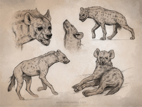 AOW11 Spotted Hyena 05-21.jpg
