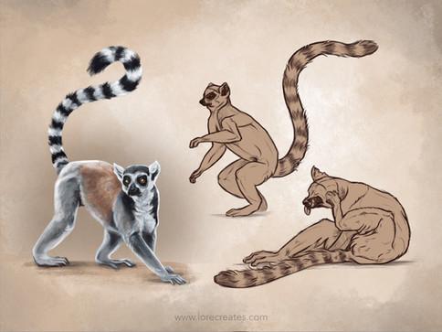 AOW8 Lemurs 04-21.jpg