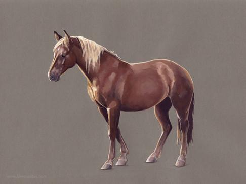 Horse study (2) 1020.jpg