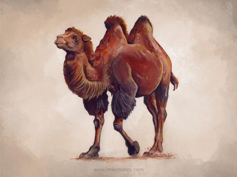 AOW10B Bactrian Camel 05-21.jpg
