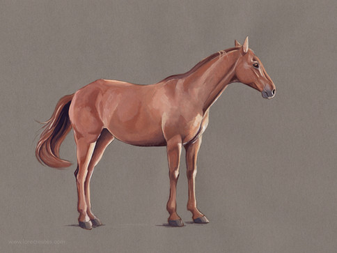 Horse study 1020.jpg