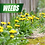 Thumbnail: Pulverize Weed Killer for Lawns, 1 Gallon Concentrate