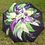 "Thumbnail: ""Beyond The Bloom"" Single Flower"