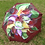 "Thumbnail: ""Intentional"" Single Flower"