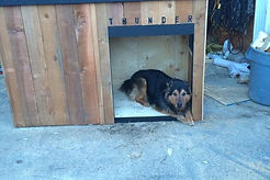 Calgary custom dog houses