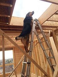Calgary building companies