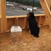 Calgary custom wood workers