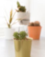 Decoación y plantas
