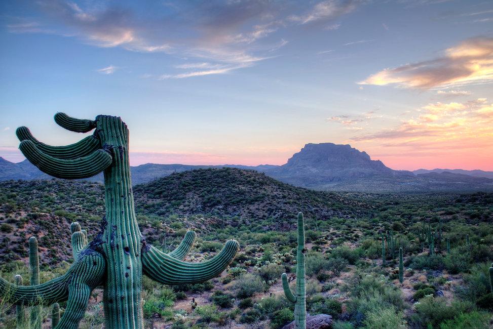 sunsetopofmountainandcactus.jpg