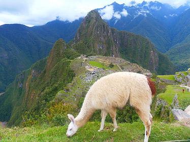 Tag 14 - Machu Picchu.jpg
