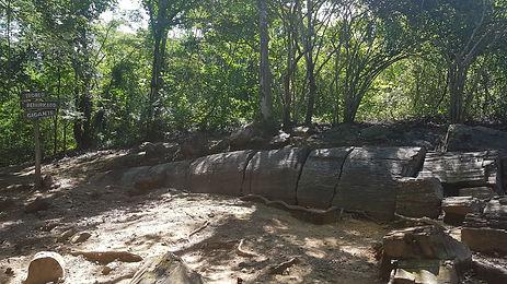 versteinerter Wald520_135140.jpg