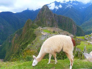 Tag 10 - Machu Picchu.jpg