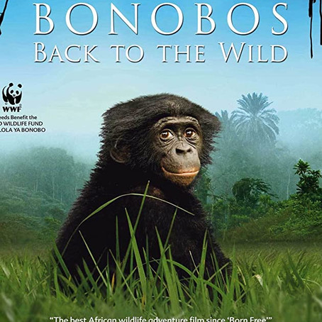 Letters from Claudine 4: Bonobos on Film!