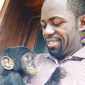 Baby bonobo held by caregiver