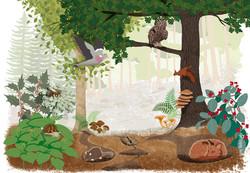 Le milieu forestier