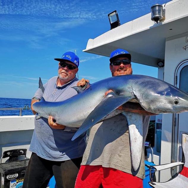 teddie-boy-blue-shark-001.jpg