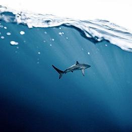 Shark fishing with Katfish charters