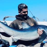 blue-shark-001