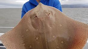 Book a boat part 3- Teddie Boy, Minehead - From the VMO Blog